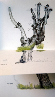 alberi 2